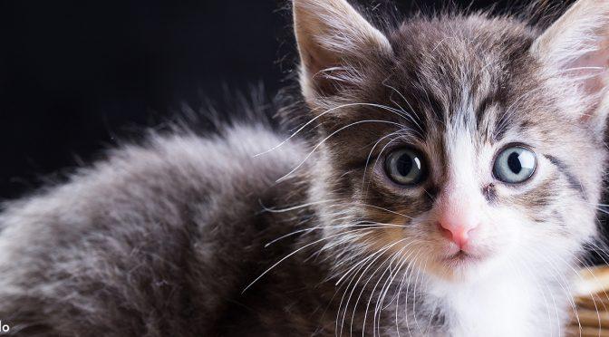 Cómo fotografiar a un gato