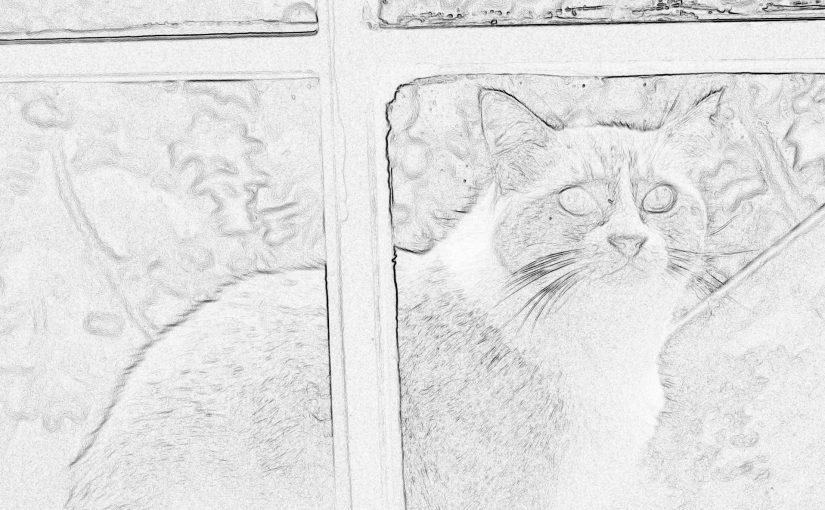 Aquel gato. De Erik Murillo.